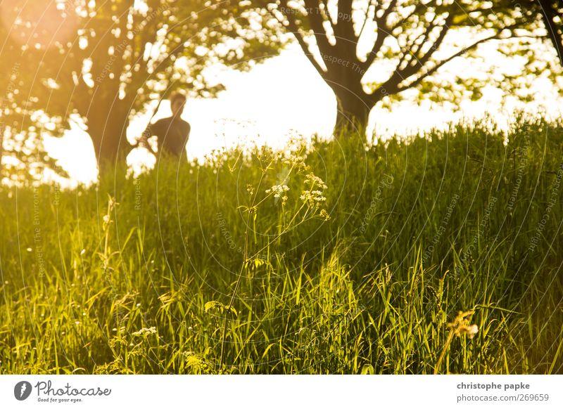 Märchenhaftes Pflänzchen (Mit Jogger) Mensch Natur schön Pflanze Sommer Erholung Landschaft Wiese Gras hell Schönes Wetter