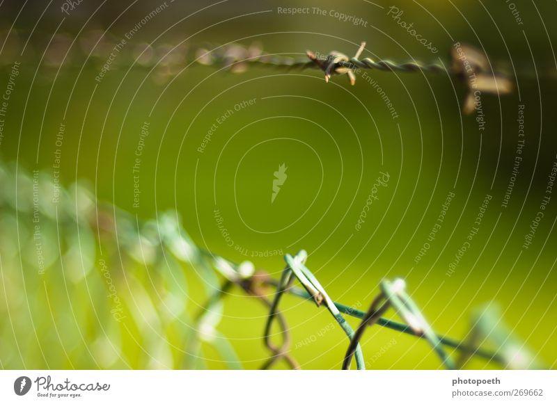 Grenzbereich Stacheldraht grün Zaun Stacheldrahtzaun Grenze Schutz Verbote Zutritt Freiheit Wiese Linie stachelig stechen aussperren einsperren geschlossen