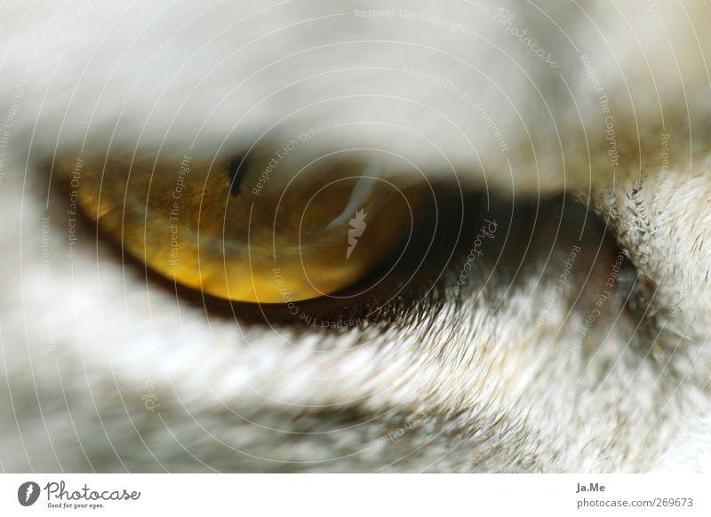 """""""I eye ya!"""" Katze Tier gelb grau Tiergesicht Katzenauge"""