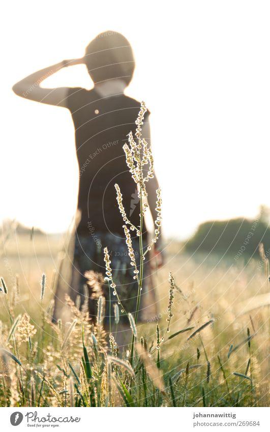 bis wohin? feminin Junge Frau Jugendliche Rücken 1 Mensch 18-30 Jahre Erwachsene Frühling Sommer Schönes Wetter Blume Gras Sträucher Feld Pause Sonnenuntergang