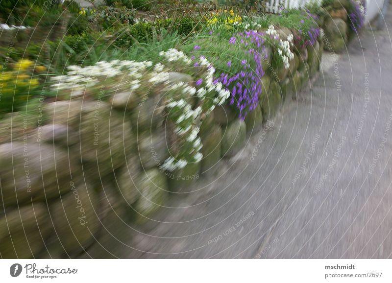 flowers on speed Blume Wand Dynamik Mauer