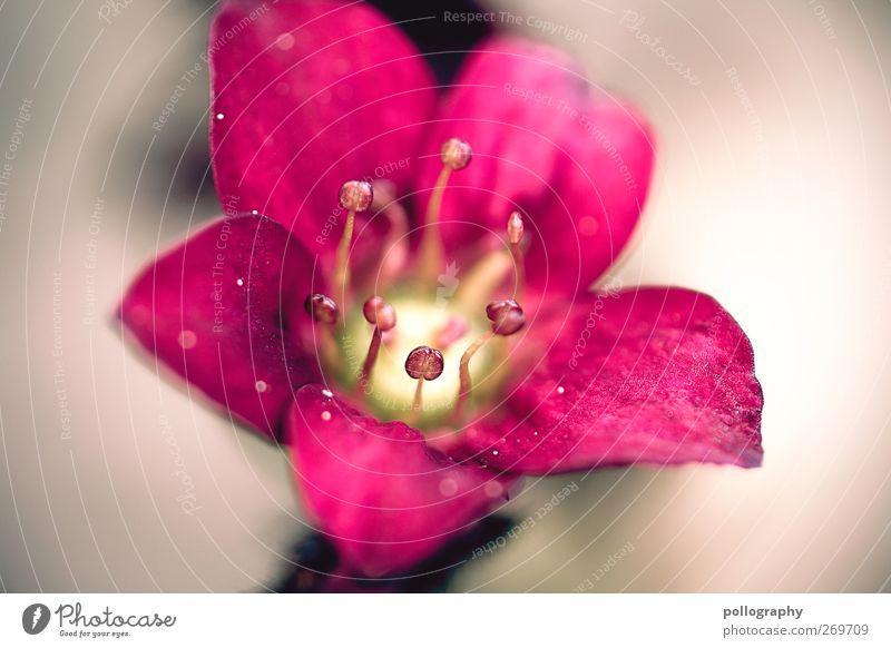 Flower Power (III) Umwelt Natur Pflanze Sonne Frühling Sommer Schönes Wetter Blatt Blüte Wildpflanze Blühend gelb grau grün rosa Frühlingsgefühle Beginn Idylle