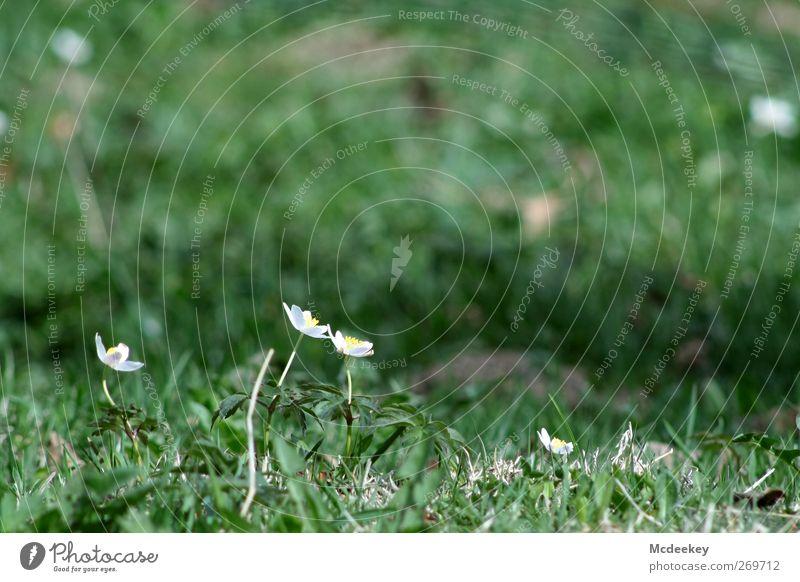 3...2...1...meine Sonne Umwelt Natur Landschaft Pflanze Frühling Blume Gras Sträucher Moos Blatt Blüte Grünpflanze Wiese authentisch Duft Zusammensein hell