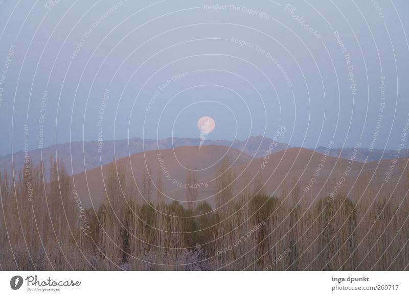 Mondschein Himmel Natur schön Pflanze Landschaft dunkel Luft träumen Erde Zufriedenheit außergewöhnlich Urelemente Hoffnung Wüste Hügel fantastisch