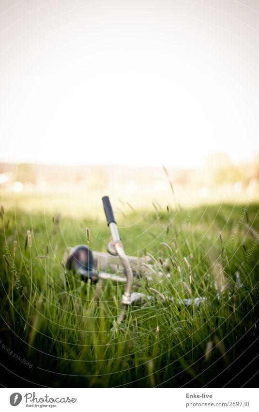 vélo Pflanze Gras Wiese Verkehrsmittel Pause Farbfoto Außenaufnahme Menschenleer Textfreiraum oben Unschärfe Schwache Tiefenschärfe Totale Zentralperspektive