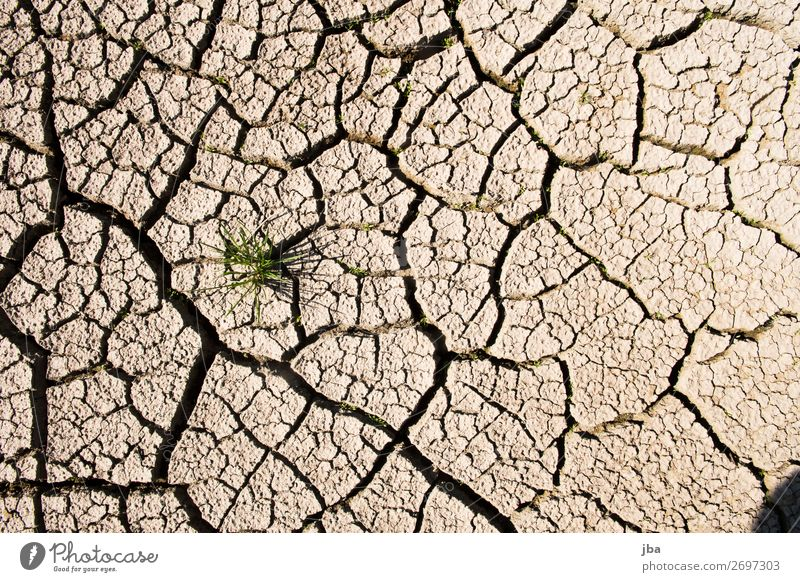 trockener Sommer Natur Pflanze Sonne Einsamkeit Gras See braun Sand Erde trist Schönes Wetter einzeln Urelemente stark