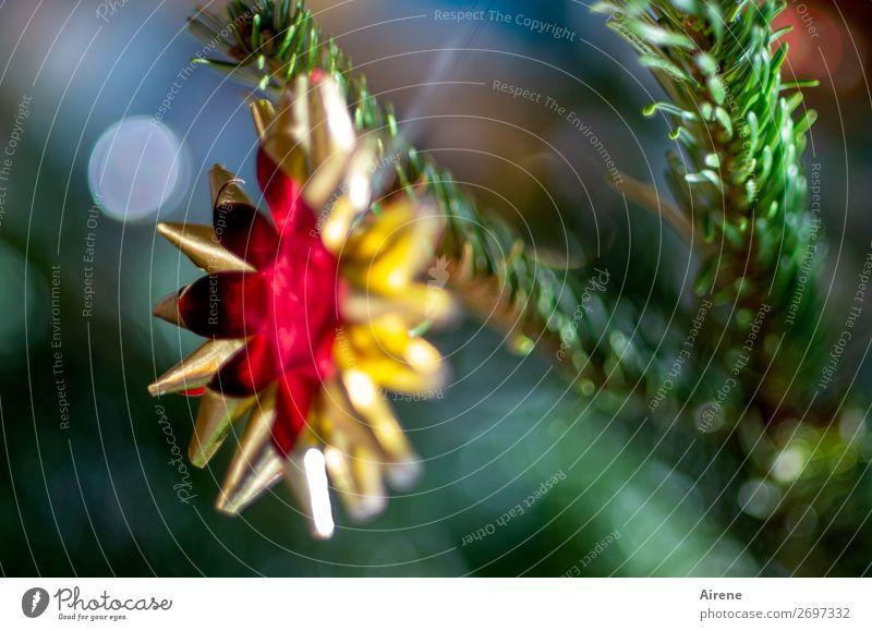 DIY-Weihnacht Weihnachten & Advent Dekoration & Verzierung Baumschmuck Goldfolie Stern (Symbol) glänzend hängen Kitsch gold grün rot Stimmung Romantik