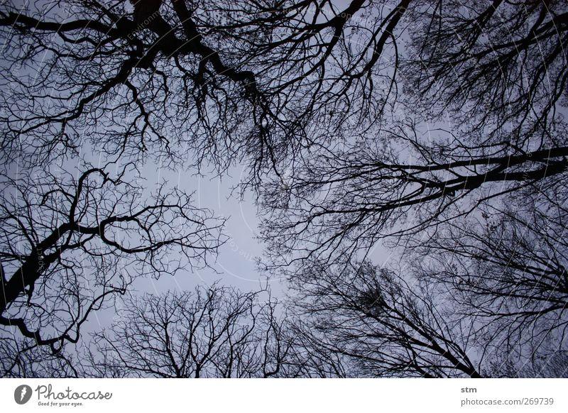 im wald Umwelt Natur Landschaft Pflanze Himmel Wolkenloser Himmel Nachthimmel Herbst Winter Schönes Wetter Baum Laubbaum laublos Park Wald Stimmung Traurigkeit