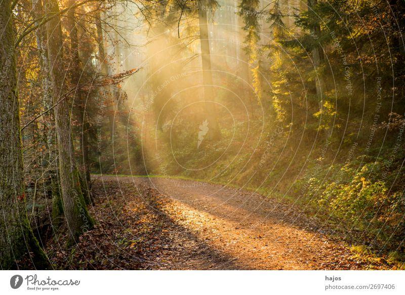 Sonnenstrahlen im Wald Erholung Winter Natur Wärme Baum hell weich Idylle Sport Wasser Wege & Pfade mystisch schön fantastisch Herbst Romantik geheimnisvoll