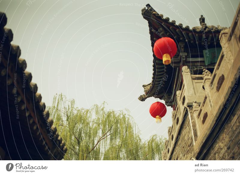 red dots Himmel Wolkenloser Himmel Frühling Schönes Wetter Baum Grünpflanze Pingyao China Dorf Kleinstadt Stadtzentrum Altstadt Skyline Menschenleer Haus Hütte
