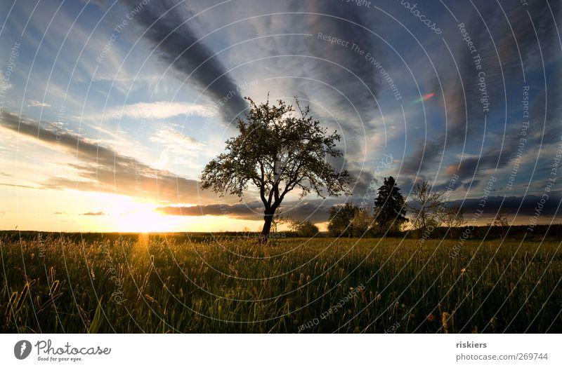 abendgold Umwelt Natur Landschaft Himmel Sonnenaufgang Sonnenuntergang Sonnenlicht Frühling Sommer Baum Gras Wiese Feld ruhig Farbfoto Außenaufnahme