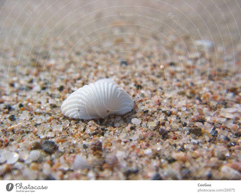 am Strand Muschel Korn Quarz weiß Spanien Sand Stein Makroaufnahme Detailaufnahme Nahaufnahme