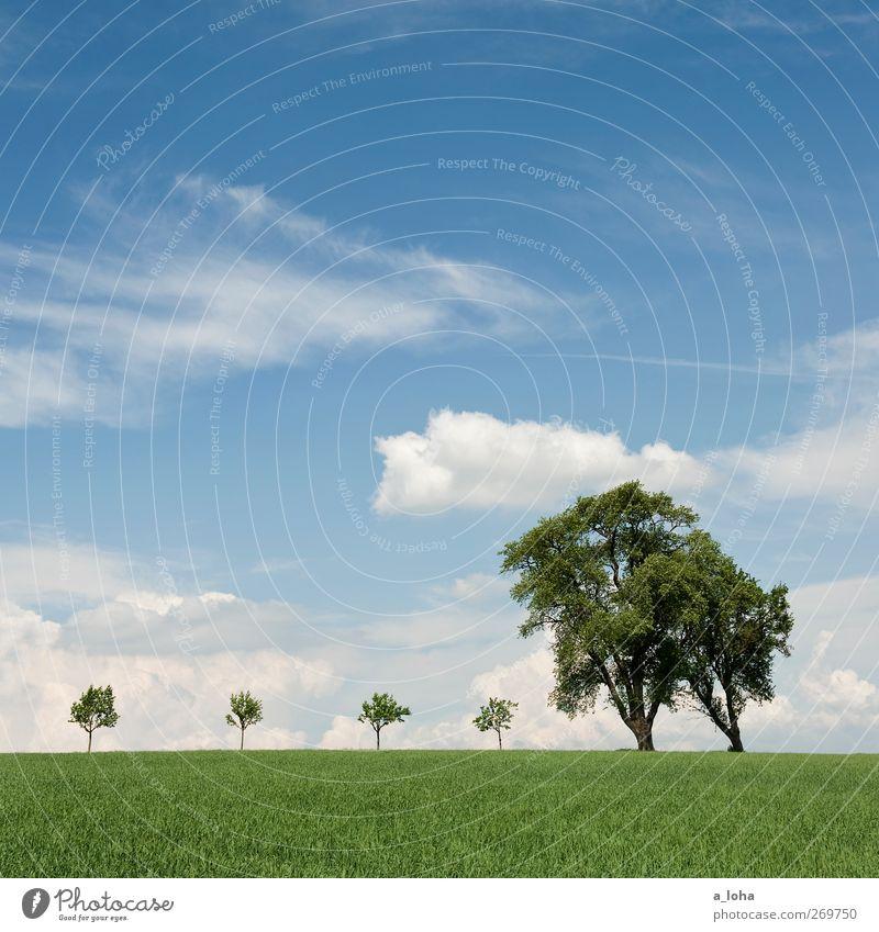 most4tel Natur Landschaft Himmel Wolken Frühling Schönes Wetter Baum Gras Nutzpflanze Feld Holz blau grün Ordnung rein Ferne Umwelt Wachstum Farbfoto