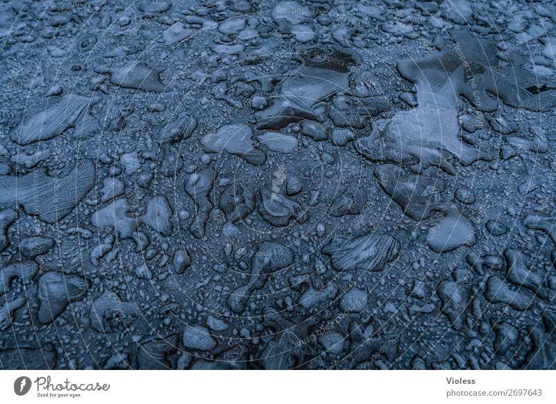 !trash! 2019 | eingefroren Wasser Wassertropfen Eis Frost kalt blau Minusgrade Urwald abstrakt Winter Menschenleer Textfreiraum Mitte