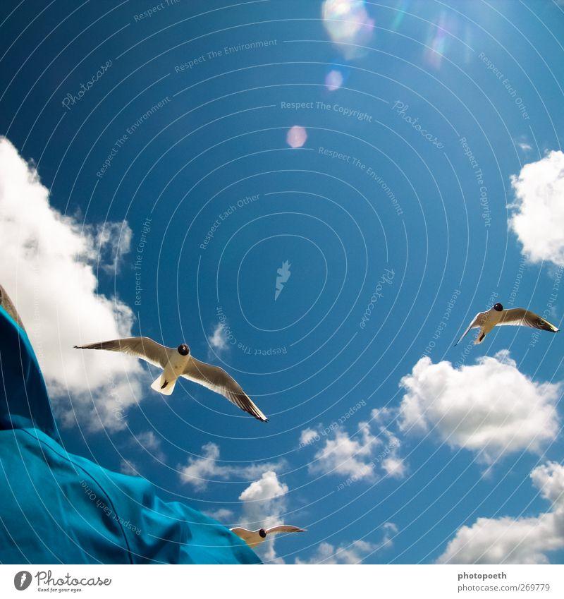 Jonathan? Himmel Wolken Schönes Wetter Vogel Möwe fliegen blau Glück Freiheit Blendenfleck Kumulus Farbfoto Außenaufnahme Textfreiraum oben Tag Sonnenlicht