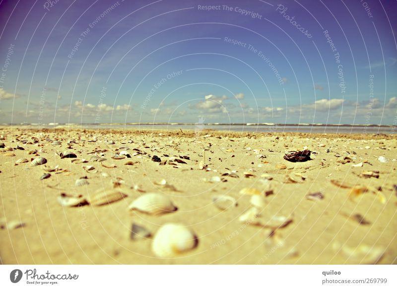 Muscheln am Strand Himmel Sommer Wolken Ferne Strand Küste Sand Horizont viele trocken Nordsee chaotisch Sommerurlaub Muschel Hülle unordentlich