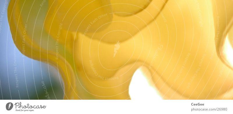 natürlich geformt Trompetenbaum Blüte Pflanze Blume Baum Kontrast gelb Wellen geschwungen organisch Strukturen & Formen weich Natur Makroaufnahme Nahaufnahme