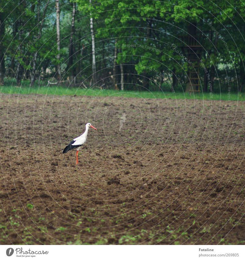 Happy Birthday Bellaluna!! Natur Baum Pflanze Tier Wald Umwelt Landschaft Frühling Vogel hell Erde Feld Wildtier natürlich Urelemente Storch