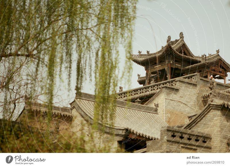 lebensraum Wolkenloser Himmel Frühling Pflanze Baum Park pingyao China Kleinstadt Stadtzentrum Altstadt Skyline bevölkert Haus Hütte Palast Burg oder Schloss
