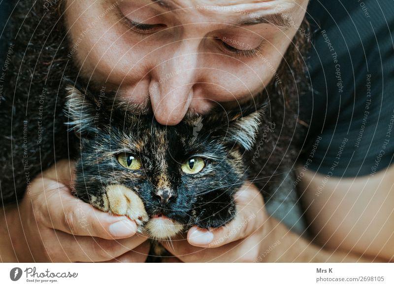Kiss maskulin Mann Erwachsene 1 Mensch Tier Katze Tiergesicht Küssen authentisch schön natürlich weich Gefühle Freude Fröhlichkeit Farbfoto Innenaufnahme Tag