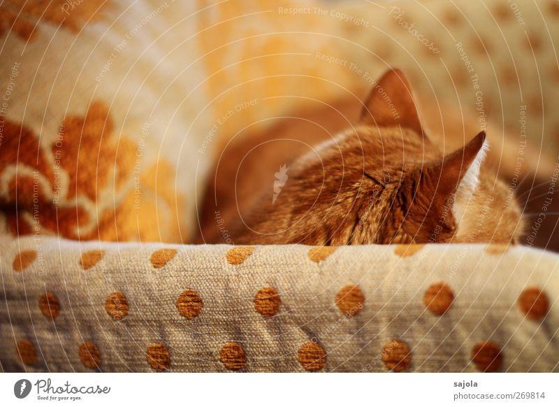 04 Katze Pardon Kater Auf Sofa Ein Lizenzfreies Stock Foto Von Photocase