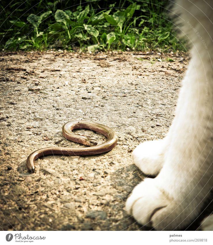 Das halbe Aurin und die Katze Tier Haustier Wildtier Schlange 2 Tapferkeit Tierfuß Farbfoto Außenaufnahme Tag Tierporträt