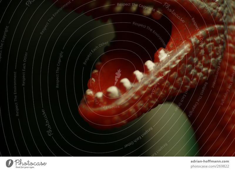 Großmaul Spielzeug Kitsch Krimskrams Souvenir Sammlerstück Kunststoff grün rot schwarz Dinosaurier T-Rex Tyrannosaurus Figur Maul Zähne Farbfoto Nahaufnahme