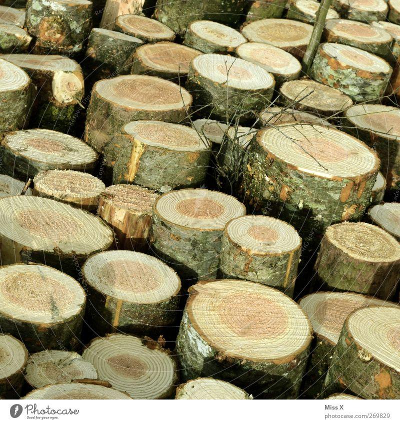 Holzig II Baum rund braun Baumstamm Ast Zweige u. Äste Abholzung Jahresringe Farbfoto Gedeckte Farben Außenaufnahme Muster Menschenleer