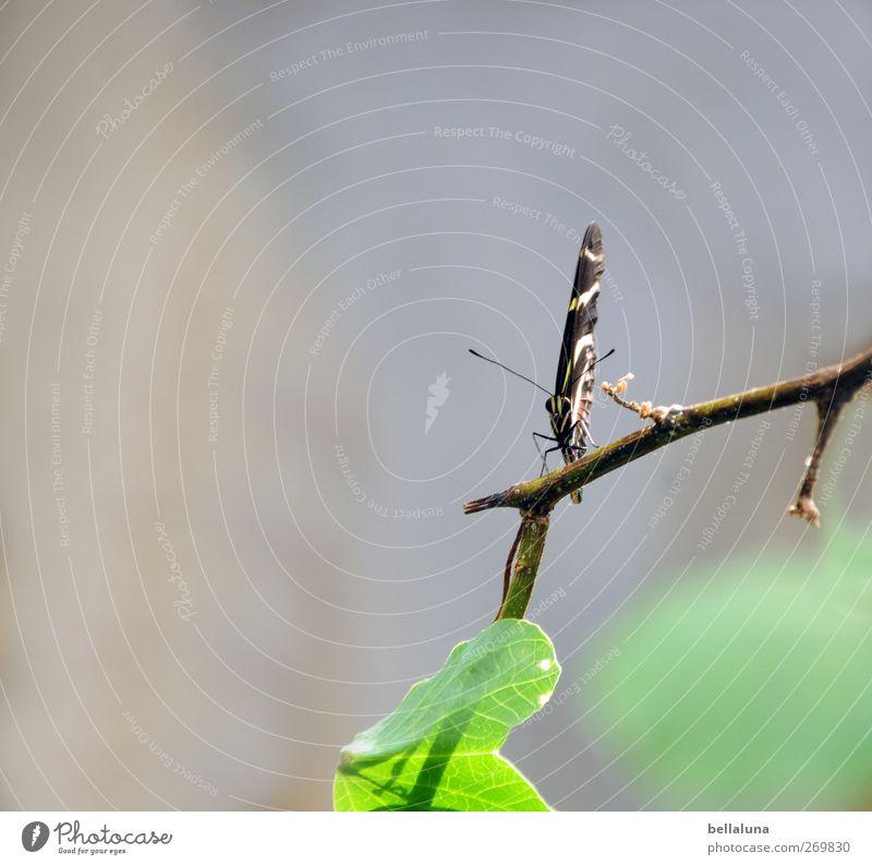 Happy Birthday, Fotoline! weiß grün schön Pflanze Tier Blatt schwarz grau braun Wildtier sitzen außergewöhnlich elegant ästhetisch Sträucher Flügel