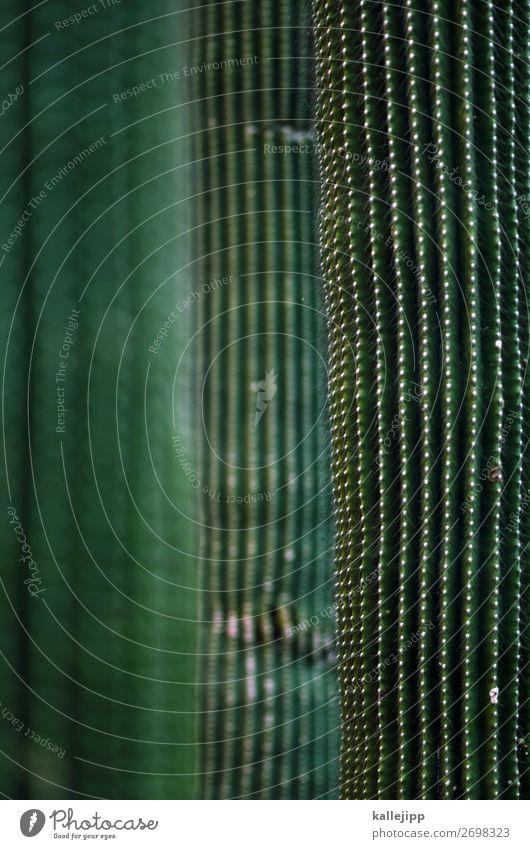 zimmerpflanze Umwelt Natur Pflanze Tier Grünpflanze Topfpflanze exotisch grün Kaktus Kakteenstacheln Stachel Dorn Spitze Zisterne trocken Wärme Photosynthese
