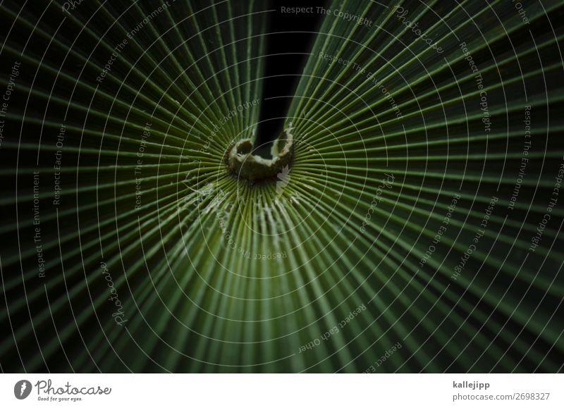 dschungelcamper Umwelt Natur Pflanze Tier Klima Baum Blatt grün Palme Palmenwedel Strukturen & Formen Linie abstrakt Urwald Stern strahlenförmig Mitte