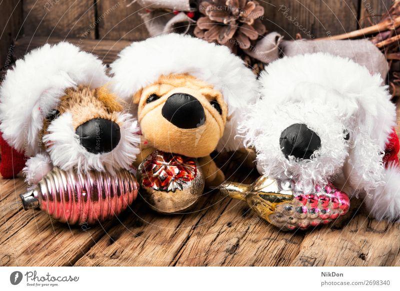 Weihnachtsdekoration mit Spielzeughund Feiertag Hund Welpe Weihnachten Dekoration & Verzierung Geschenk neu Winter Jahr Dezember Kiefer Konzept Vorabend Tanne