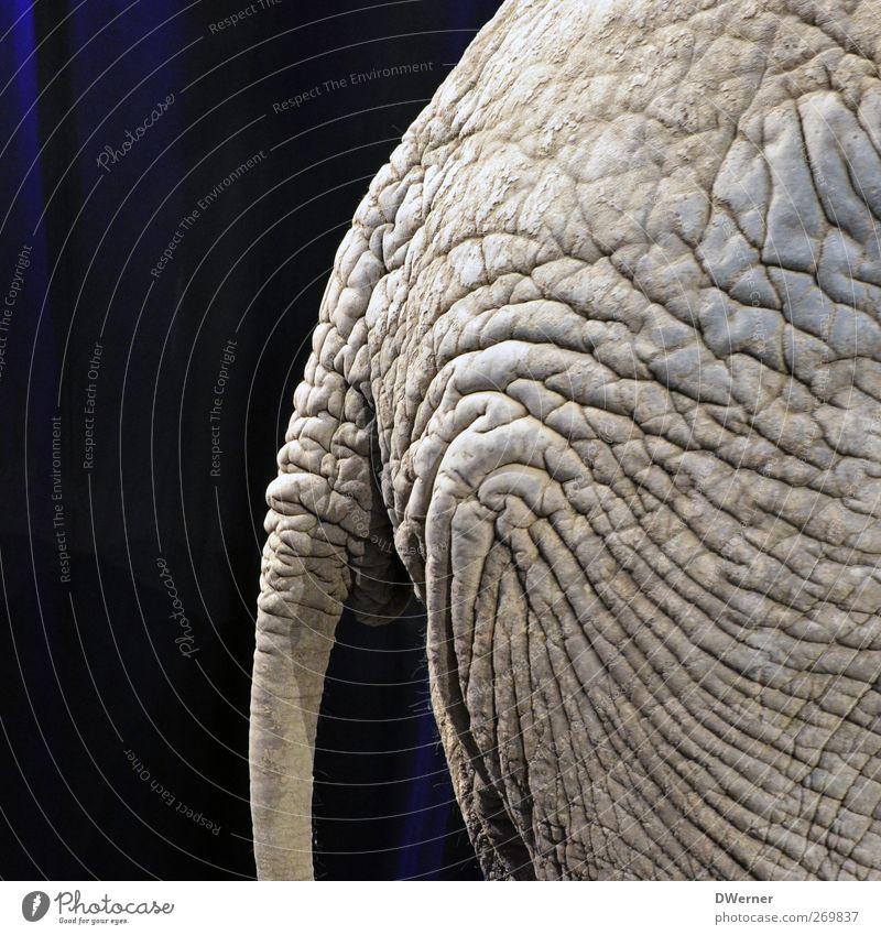fürn Ar....! Natur Tier grau Lampe Wildtier dreckig Haut rund Gesäß Fell Hautfalten Hügel Tierhaut Übergewicht dick skurril