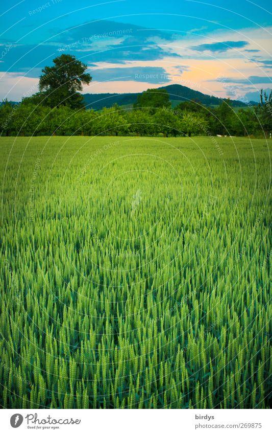 Abendstimmung in der Hohenlohe Natur blau schön grün Sommer Baum Landschaft Wolken Ferne Umwelt gelb Berge u. Gebirge Stimmung Horizont Idylle Ernährung
