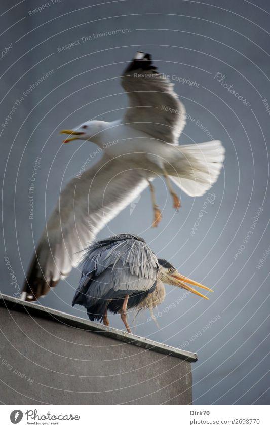 Unexpected Fly By Natur Haus Tier Wand Umwelt Mauer Vogel fliegen Angst frei Wildtier Schönes Wetter gefährlich Flügel Beton bedrohlich