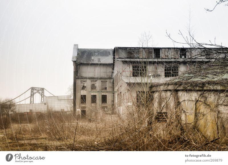 No sleep till Brooklyn I grün Stadt Pflanze Fenster Wand Architektur Mauer Gebäude braun Fassade Brücke kaputt Dach Sträucher trist Wandel & Veränderung
