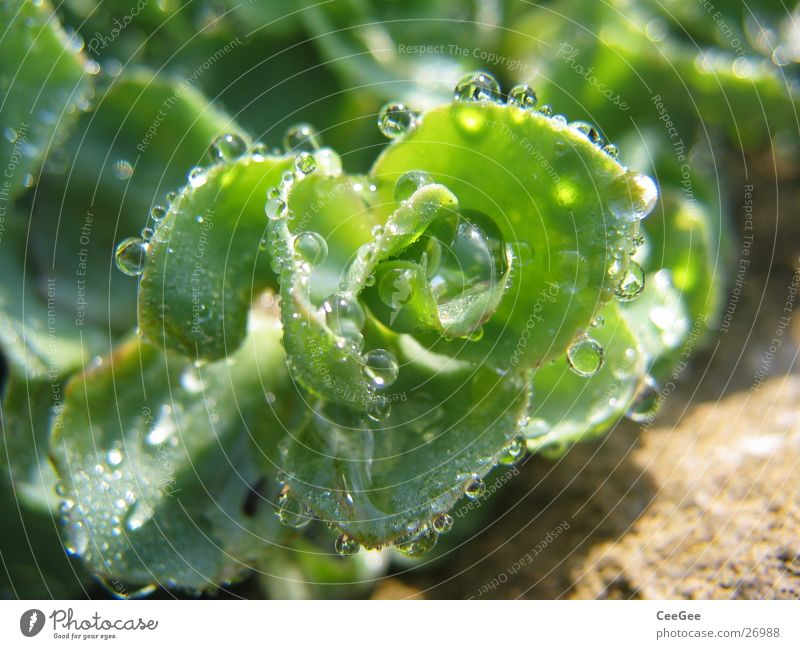 aufgereiht Natur Wasser grün Pflanze Regen Wassertropfen nass Seil feucht