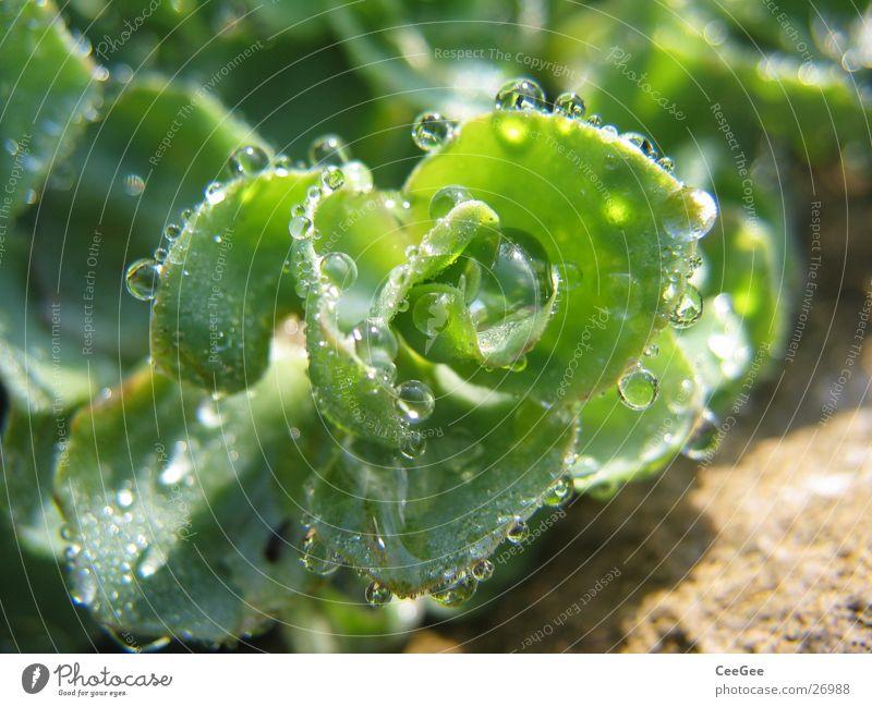 aufgereiht Reflexion & Spiegelung Pflanze grün Morgen nass feucht Natur Wasser Wassertropfen Seil Nahaufnahme Makroaufnahme Regen