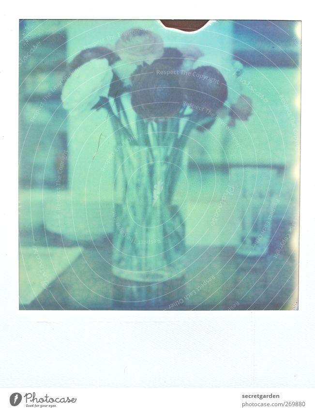 muttertag Pflanze grün schön Wasser weiß Blume dunkel Frühling Feste & Feiern Wohnung träumen Raum Dekoration & Verzierung Glas Geburtstag Tisch