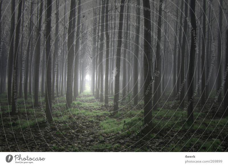 Zauberwald Landschaft Frühling Nebel Baum Wald Menschenleer Macht Romantik Sehnsucht Angst bedrohlich Inspiration kalt Konzentration Mittelpunkt Ordnung