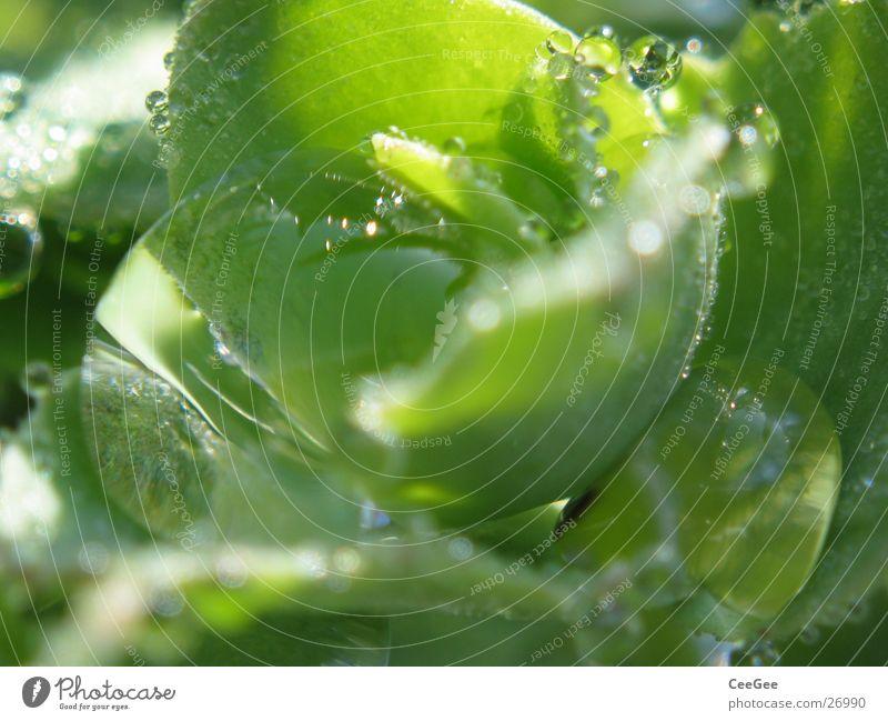 Wasserspiegel Natur Wasser grün Pflanze Regen Wassertropfen nass Seil feucht