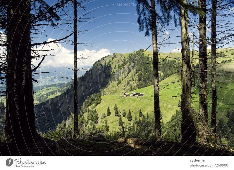 Kurze Verschnaufpause, dann weiter Himmel Natur Ferien & Urlaub & Reisen Baum Sommer ruhig Wald Erholung Ferne Umwelt Landschaft Wiese Berge u. Gebirge Leben Wege & Pfade Horizont