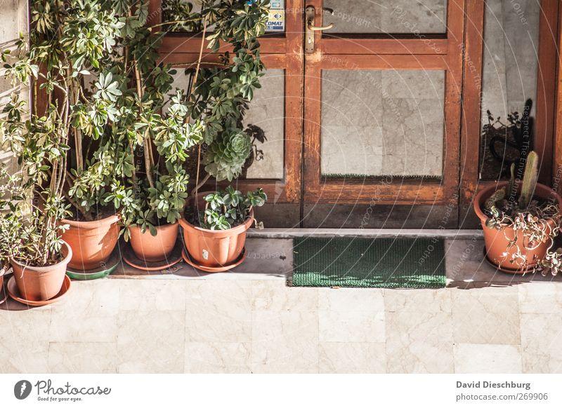 Mediterraner Eingangsbereich Grünpflanze Fenster Tür Fußmatte alt braun Blumentopf Marmorboden Fensterscheibe mediterran Farbfoto Außenaufnahme Detailaufnahme