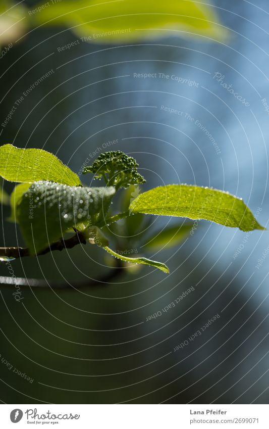 Himmel Natur Sommer Pflanze schön grün Landschaft Sonne Baum Wolken Blatt Wald Umwelt Frühling Garten Park