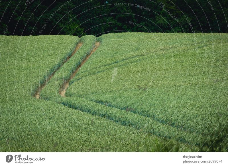 Fast jeder Weg führt zum Ziel./  In einem Grünen Feld sind zwei Reifenspuren zu sehen.. Von Links nach oben mit Knick. Der Hintergrund ist dunkel. Freude
