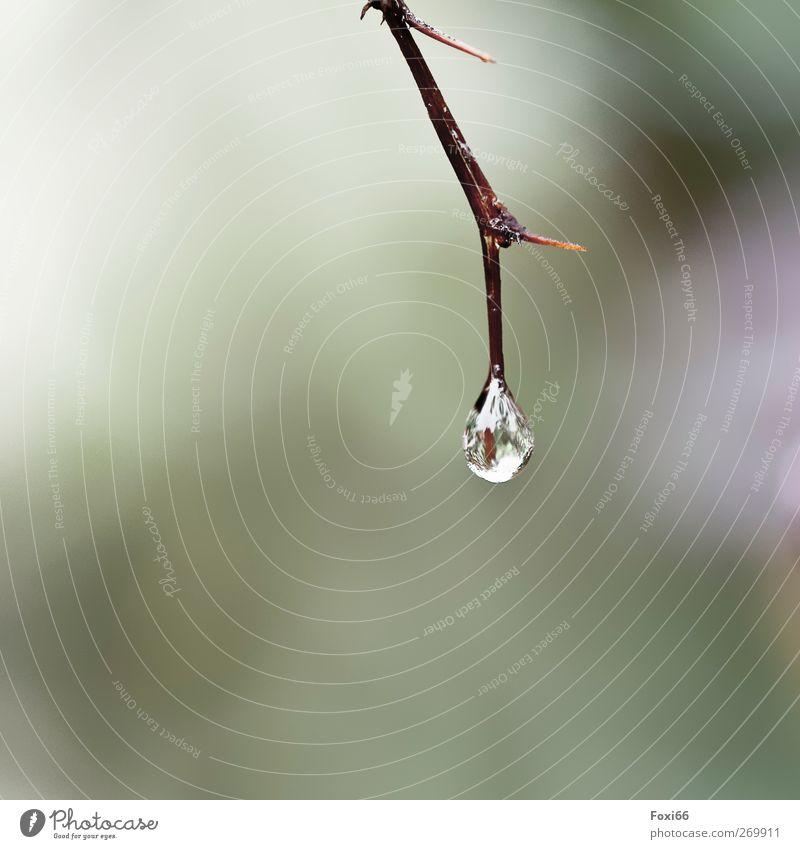 nach dem Regen Natur Wasser Wassertropfen Frühling Klima Wildpflanze Feld Holz Tropfen authentisch Flüssigkeit glänzend kalt nass natürlich Sauberkeit braun