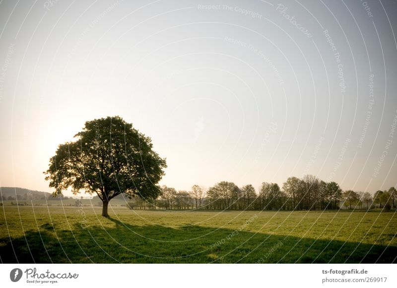 Naturalien Umwelt Landschaft Himmel Wolkenloser Himmel Sonne Sonnenaufgang Sonnenuntergang Sonnenlicht Frühling Sommer Klima Schönes Wetter Pflanze Baum Gras