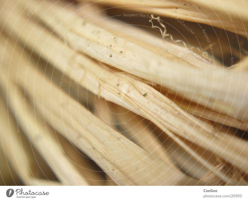 gebunden Stroh Faser geflochten Holz Natur Makroaufnahme Nahaufnahme ockergelb Strukturen & Formen