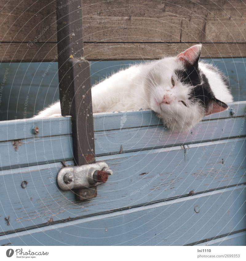 Katze, schwarz weiß 1 Tier Holz Metall blau braun grau rosa silber Hauskatze Kuscheln Wohlgefühl faulenzen Schnurren Schwarzweißfoto betteln Streicheln liegen