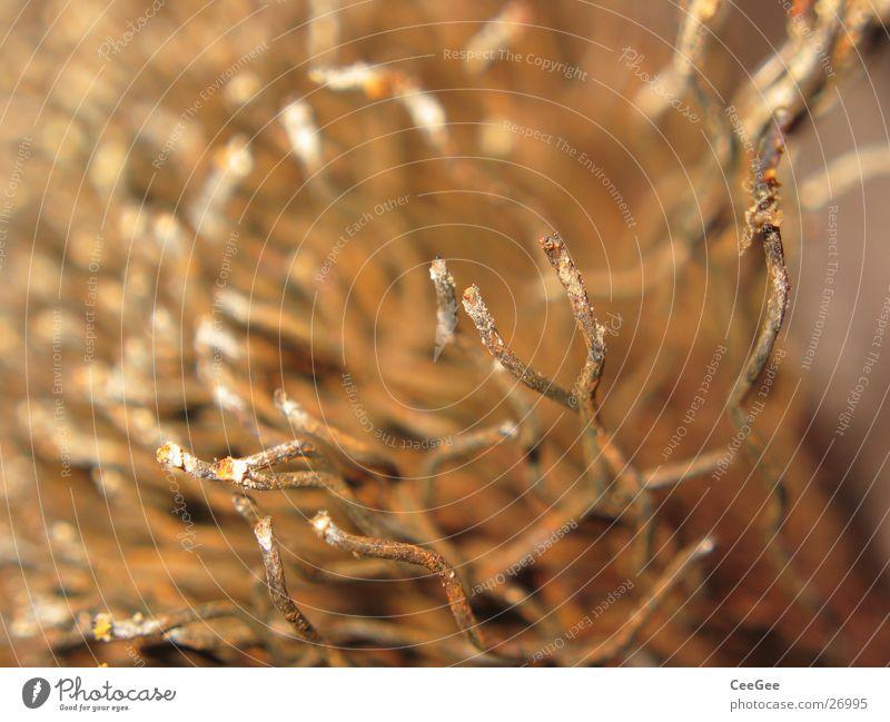 Drahtbürste Physik Werkzeug Ocker geschwungen Wellen Handwerk Bürste Gliedmaßen Metall Rost Wärme Farbe Makroaufnahme Nahaufnahme Detailaufnahme
